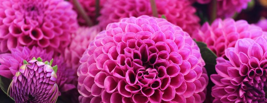 Billede til Blomster- og haverejser