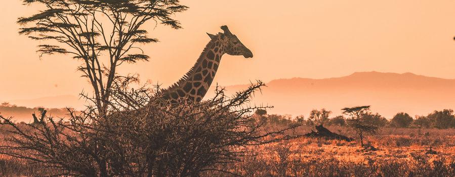 Billede til Naturrejser